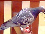 Pigeonholing, bane or benefit? – Part2